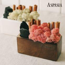 코모에 모던 스칸디아모스 숯 화분 DIY세트-공기정화