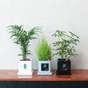 사각(시멘트)화분 - 공기정화식물(율마 고무나무 아이비)