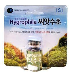 YB 하이그로필라 씨앗수초 [S]
