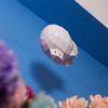 날아라비행선 airship