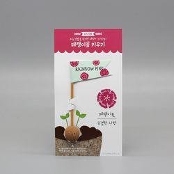 씨드깃발-패랭이꽃