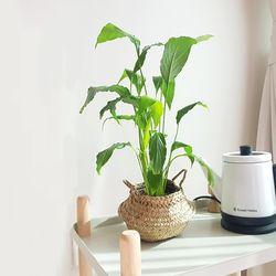 실내공기정화식물 화분세트 기획전 (화이트원형화분)