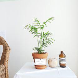 실내공기정화식물 화분세트 기획전 (브라운원형화분)