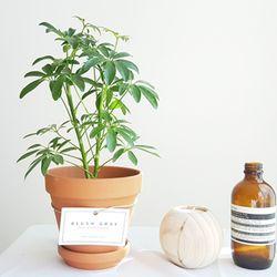 실내공기정화식물 화분세트 기획전 (모카 이태리토분)