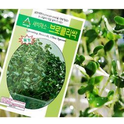 건강 새싹씨앗 - 브로콜리