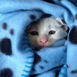 반려동물 담요 강아지 고양이 방석