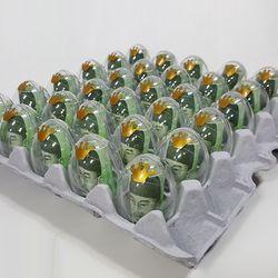 계란한판 생일선물세트[계란판 뚜껑+투명에그캡슐+리본+토퍼]