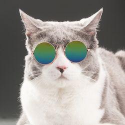 고양이 강아지 선글라스 안경 냥글라스 도글라스