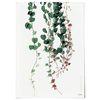 중형 패브릭 포스터 F286 식물 넝쿨 덩굴 액자 그린 아이비