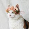 고양이 강아지 블라썸 화관 꽃 머리띠 옷 모자 Miyopet 미요펫
