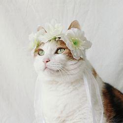 고양이 강아지 빅플라워 화관 꽃 머리띠 옷 모자 Miyopet 미요펫