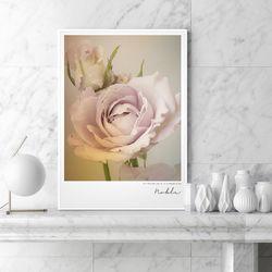 노블 장미 꽃 그림 액자 A3 포스터