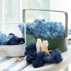 25g 천연이끼 공기정화 식물 스칸디아모스 단품 블루