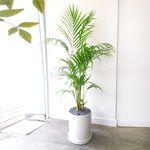 공기정화식물 아레카야자 화분세트 중대형
