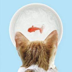 썩유케이 강아지 고양이 물그릇 식기