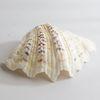 물결무늬 조개껍질 1P(대)