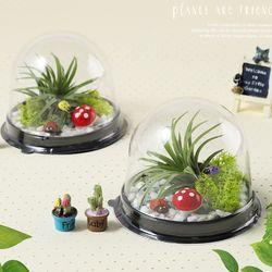 먼지먹는이오난사 기르기세트(5개)식물키우기