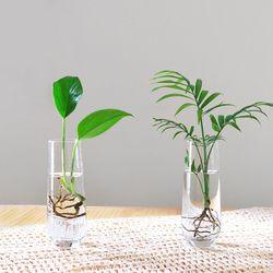 공기정화식물 수경재배 vase SET(크리스탈 투명 롱 유리병)