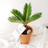 공기정화식물 열대식물 소철 토분