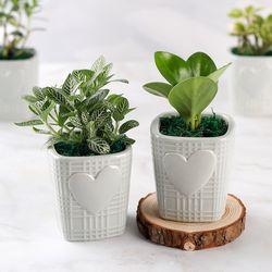 가꾸지오 공기정화식물 미니하트화분 16종