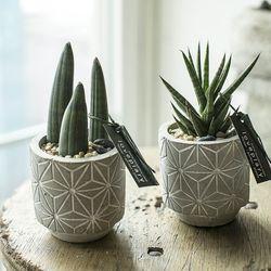 거실인테리어화분 스투키 북유럽 시멘트 미니다육식물