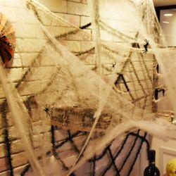 거미줄 과 왕거미