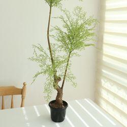 측백인조나무