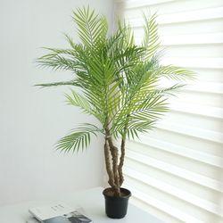 팜트리인조나무