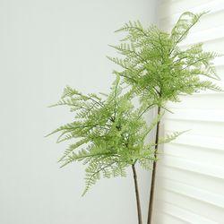 펀트리인조나무