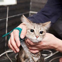 [무료배송] 냥품멍품 냥멍 쓰담 샤워기 반려동물 전용 샤워기