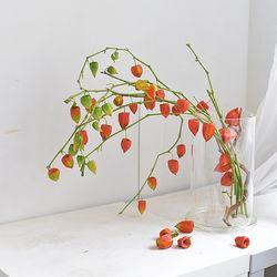 꽈리 생화 드라이플라워 가능한 인테리어 소품 식물