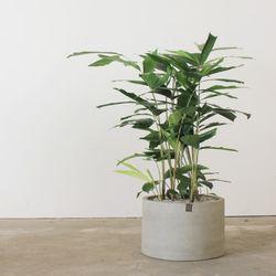 [공기정화식물인테리어화분]미세먼지제거에 우수한 공작야자