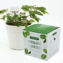 움직이는 식물 - 미모사 키우기