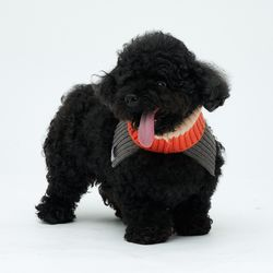 Orange Cheez Neck Warmer 소형견- S Size