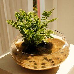 실내공기정화 유리수반 마리모 백운산 키우기-식물:3종 중 택1