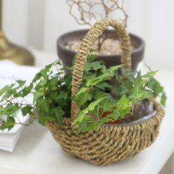 미니 라탄 바구니화분(라탄 사탕바구니)