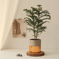 [plant] 아라우카리아 생화 크리스마스트리장식