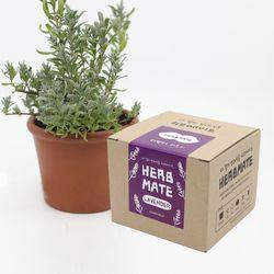 허브메이트 - 라벤더 키우기(박스형)