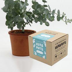 허브메이트 - 유칼립투스 키우기(박스형)