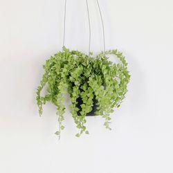 공기정화 가랜드 행잉식물 밀리언하트