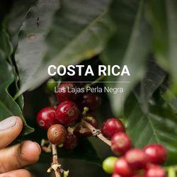 갓볶은 커피 코스타리카 라스라하스 페를라네그라 1kg