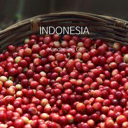 갓볶은 커피 인도네시아 만델링 G1 1kg HACCP인증