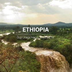 갓볶은 커피 에티오피아 구지 우라가 워시드 G1 1kg