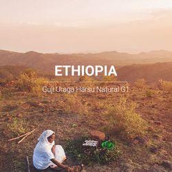 갓볶은 커피 에티오피아 구지 우라가 내추럴 G1 1kg