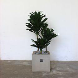 [공기정화식물개업축하화분] 콤팩타