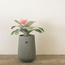 플랜테리어화분꽃이예쁜식물 에크메아