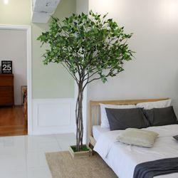 조화나무 실내조경 인테리어 내츄럴 자작나무210cm (사방형)