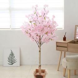 조화나무 실내조경 인테리어 구름벚꽃나무150cm (사방형)