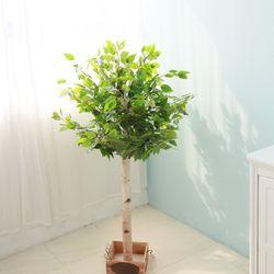 조화나무 실내조경 인테리어 킹벤자민나무130cm (사방형)