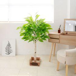 조화나무 실내조경 인테리어 망고나무130cm (사방형)